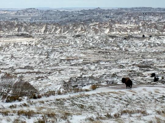 Més espai pels bisonts de les Badlands