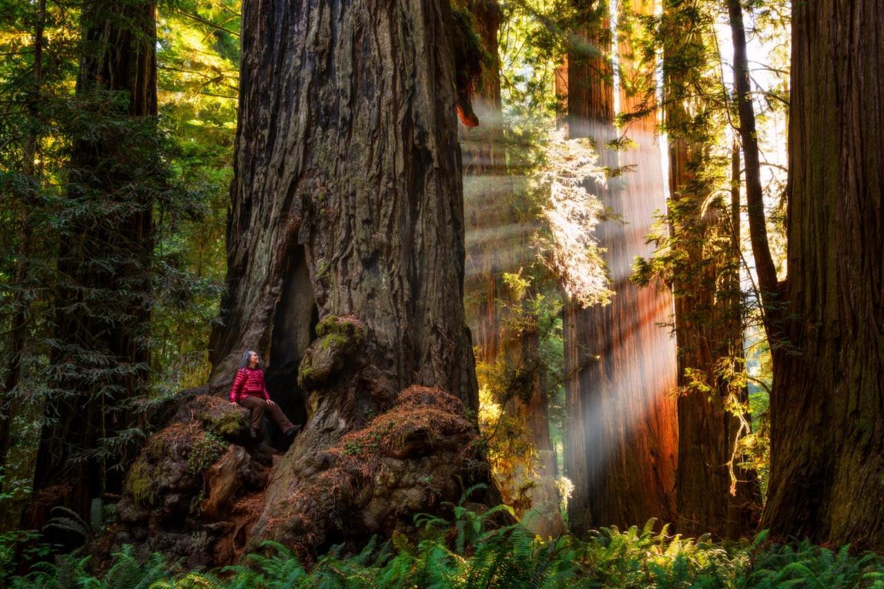 Els parcs nacionals i estatals dels Redwoods
